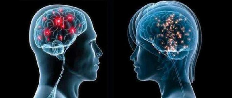 El genero en el cerebro (Parte II)