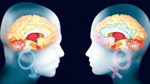 Cerebro de hombre o mujer